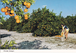 FLORIDE - LUSCIUS FLORIDA ORANGES - Etats-Unis