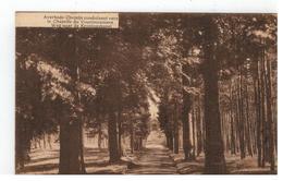 Averbode  Chemin Conduisant Vers..  Weg Naar De Kroningskapel - Scherpenheuvel-Zichem