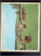 CALENDRIER 1971 PATURE CHEVAUX ALMANACH DES P.T.T. - Calendriers
