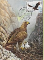 CARTE MAXIMUM - MAXICARD - MAXIMUM KARTE - MAXIMUM CARD - ESPAGNE - OISEAUX - Aquila Heliaca Adalberti - Águilas & Aves De Presa