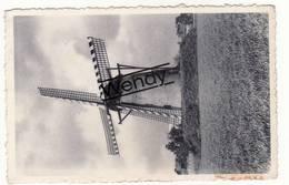 Overpelt (windmolen) - Overpelt