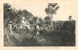 MAJUNGA EN FILANZANE DANS LES SATRANA LA BROUSSE - Madagaskar