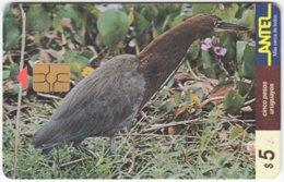 URUGUAY A-296 Chip Antel - Animal, Bird - Used - Uruguay