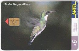URUGUAY A-311 Chip Antel - Animal, Bird, Colibri - Used - Uruguay