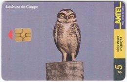 URUGUAY A-316 Chip Antel - Animal, Bird, Owl - Used - Uruguay