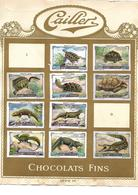 Images Chocolat Cailler 20 Reptiles Et Fleurs Des Alpes. Séries 7 Et 8. Collées Sur Feuille Album.. Envoi 1,72 €. - Autres
