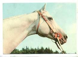 Koń Konie Horse Horses Pferd Pferde Cheval Chevaux  Lata 70 / 80 - Cavalli