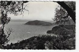 83 - LE CANADEL - Vue Panoramique Du Cap Nègre - 1957 (H16) - Rayol-Canadel-sur-Mer