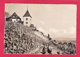 Modern Post Card Of Erlenbach, Zurich, Switzerland,L61. - ZH Zurich