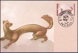 Bosnia And Herzegovina (Croatia) - The Fauna Of BiH: Pine Marten (Martes Martes), Maximum Card, 1999 - Rodents