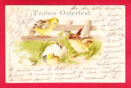 Paques-72D01  Poussins Regardant Un Poussin Sortir De Sa Coquille, Un Escargot Sur La Coquille, Cpa Précurseur BE - Pâques