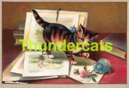IMAGE CHROMO MAISON PAUL HENRIETTE BRUXELLES CHAT CAT KATZE KAT ( 10 CM X 7 CM ) - Sonstige