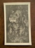 Oude Originele FOTO -- Postkaart     GEVAERT    Van HOND - Chiens