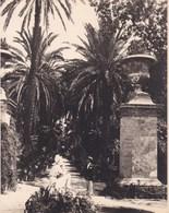 PALERMO PALERME SICILIA Jardin Botanique 1926 Photo Amateur Format 7,5 Cm X 5,5 Cm - Luoghi