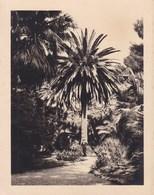 PALERMO PALERME SICILIA Villa TASCA 1926 Photo Amateur Format 7,5 Cm X 5,5 Cm - Luoghi