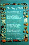 The Story Of Shells - Fish & Shellfish