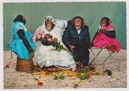 Mariage Famille De Singes - 1968 - Scimmie