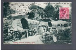 CEYLON Carting Tea From Factory 1910 OLD POSTCARD - Sri Lanka (Ceylon)