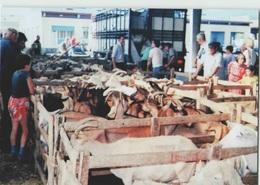 CPM 12 LAISSAC ... Le Marché Aux Bestiaux . Le Secteur Caprins (Livenais MA120889) Chèvres - Altri Comuni