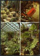C6396 - Jena Botanischer Garten - Blumen Pflanzen - Reichenbach DDR - Botanik