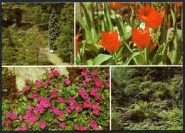 C6397 - Jena Botanischer Garten Friedrich Schiller Universität Alpinum - Blumen Pflanzen - Reichenbach DDR - Botanik
