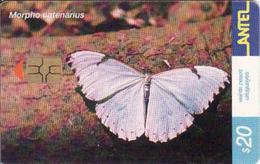Uruguay, Antel Chip Fauna, Butterfly - Uruguay