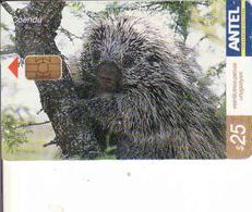 Uruguay, Antel Chip Fauna, Coendu - Uruguay