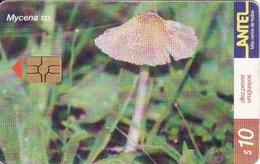 Uruguay, Antel Chip Fauna, Mushroom, Mycena Sp. - Uruguay