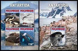 MOZAMBIQUE 2019 - Antarctica. M/S + S/S. Official Issue - Mozambique