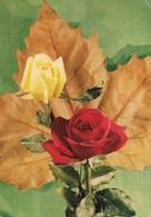 ROSE - VIAGGIATA DA BENTIVOGLIO 1968 - Fiori