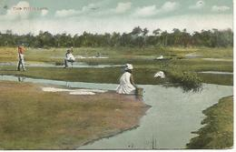 St20/     Trinidad     The Pich  Lake - Cartes Postales