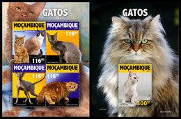 MOZAMBIQUE 2019 - Cats. M/S + S/S. Official Issue [MOZ190308] - Mozambique