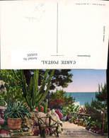 618205,Monaco Les Jardins Exotiques Kakteen Kaktus - Ohne Zuordnung
