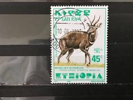 Ethiopië / Ethiopia - Bosbok (45) 2000 - Ethiopia