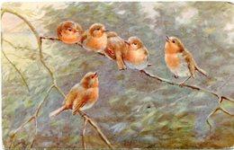 """SWEET SONGSTERS"" PAJAROS BIRDS OISEAUX. EDIT ""TUCK & SONS"" ""OILETTE"". ART POSTALE, ARTE PORTAL CPA NON CIRCULE -LILHU - Pintura & Cuadros"