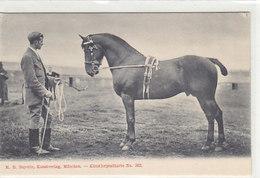 Pferdedressur    (A-82-160720) - Chevaux