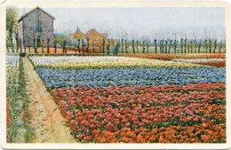 AMSTERDAM, PLANTATIONS DE FLEURS. HOLLAND POSTALE PORTAL CPA CIRCA 1920's NON CIRCULE -LILHU - Amsterdam