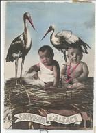 Souvenir D'Alsace. Deux Enfants Dans Un Nid De Cigogne. Montage Photographique. - Souvenir De...