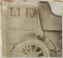 Chiens Dans Leur Niche Ad Hoc à L'arrière D'une Voiture. 1900-10. - Photos