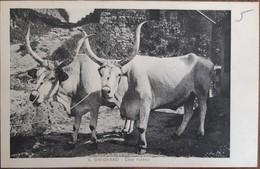 Cartolina Siena - SAN GIMIGNANO - Casa Rustica - Coppia Di Buoi Senesi - Usi E Costumi - Tradizioni - Mestieri - Siena