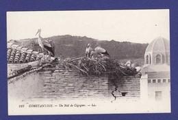 CONSTANTINE Nid De Cigognes (Très Très Bon état ) TZ 492 - Constantine