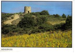 34 FELINES MINERVOIS Vers Olonzac N°120 Moulin à Vent Entrée Territoire Cru Minervois La Livinière Phot Cunillere Sète - Sin Clasificación