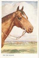"""Florence E. Valter. Horses.On The Downsr"" Nice Valentine Horses Series PC # 5083 - Valter, Fl. E."