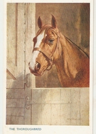 """Florence E. Valter. Horses. Th Thoroughbredr"" Nice Valentine Horses Series PC # 5086 - Valter, Fl. E."