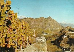 Sion (pres De) (Valais, Svizzera) Domaine Du Mont D'Or, Panorama Vigneti, Vue Vignobles - VS Valais
