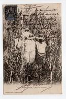 - CPA MADAGASCAR - Dans Les Bararatra 1904 - Photo Couadou 119 - - Madagascar