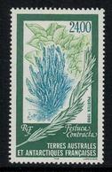 T.A.A.F. // 1999 //  No.244 Y&T Neuf**  Flore Antarctique - Neufs