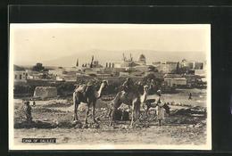 AK Cana Of Galilee, Teilansicht Mit Kamelen - Palästina