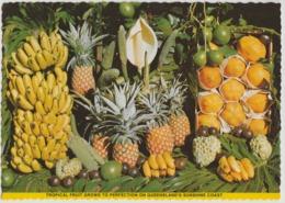 Australia QUEENSLAND QLD Tropical Fruit SUNSHINE COAST Kuskopf 170 Postcard C1970s - Sunshine Coast