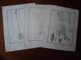 Bourbon : Trois Eaux Fortes Par Bory De Saint-Vincent (1804) Plantes Endémiques De La Réunion - Historical Documents